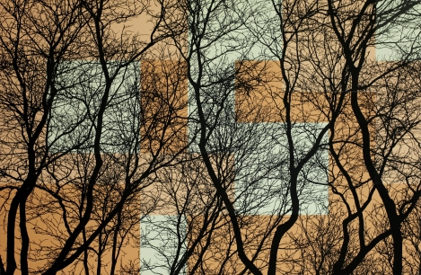 TREES L1