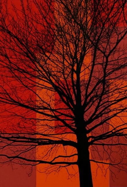 TREES P1