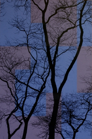 TREES P2
