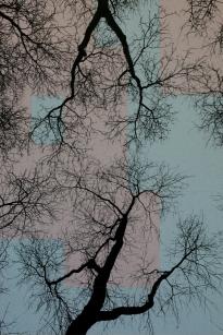 TREES P3