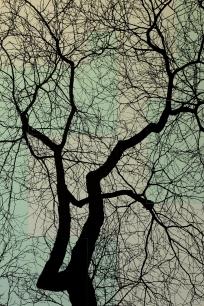 TREES P4