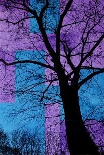 TREES P5